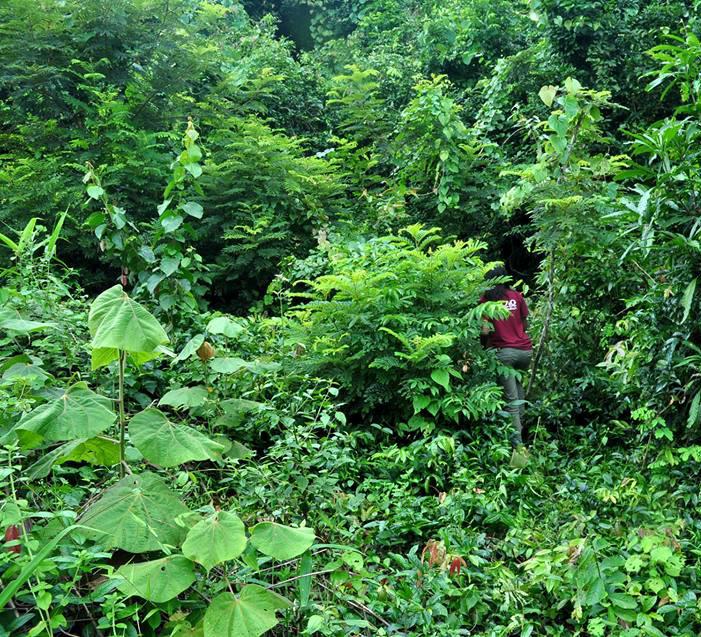 Releasing an animal into a rainforest