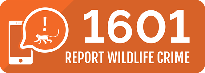Report wildlife crime
